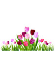 isolated tulip spring banner vector image vector image