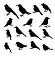 set birds silhouettes vector image vector image
