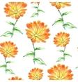 Watercolor calendula herbs seamless pattern vector image vector image