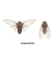 cicada vector image