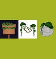 liana vine design concept vector image
