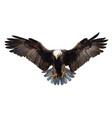 bald eagle landing hand draw on white vector image