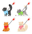 cat harness and leash icon set vector image vector image