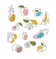 fruits icons set hand drawing in line style vector image vector image