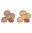 flat icons of peanuts vector image