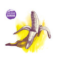 hand drawn banana on watercolor yellow background vector image