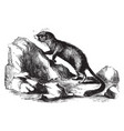 rock rat vintage vector image vector image