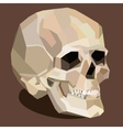 skull on the brown background vector image vector image