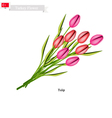 Tulip Flowers The National Flower of Turkey vector image vector image