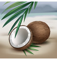 coconuts on seaside vector image vector image