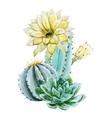 Watercolor cactus vector image vector image