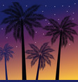 beach tree palms at sunset vector image vector image