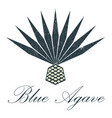 blue agave logo design vector image