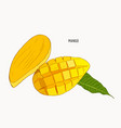 mango hand drawn vintage style vector image vector image
