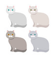 scottish exotic shorthair cat with a different vector image