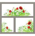 Set summer flower poppy daisy isolated on white vector image vector image
