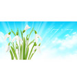 snowdrop flower horizontal background vector image vector image
