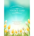 Summer card with white tulips vector image vector image