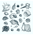 Collection with various sea shells vector image