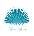 blue agave or or tequila agave plant vector image