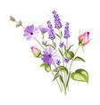 chicory garland elegant card vector image vector image