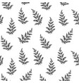 hand drawn fern leaves vector image vector image