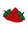 Hand painted strawberry berries close up vector image
