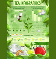 tea beverage infographics charts graphs vector image