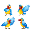 Four colorful parrots vector