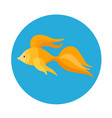 sea fish flat icon vector image