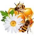 Honeycomb bee flowers emblem vector image