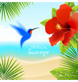 tropical background with hummingbird vector image vector image