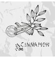 Hand drawn cinnamon vector image