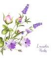 vintage botanical vector image vector image