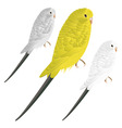 cute vector budgie vector image vector image