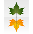 Green and dry leaf vector image