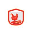 hen chicken nest egg shield retro vector image vector image