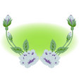 image of a beautiful flower vector image vector image