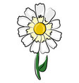 simple daisy flower on white background vector image vector image