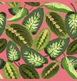 tropical green leaves maranta and dieffenbachia vector image vector image