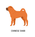 chinese shar pei cute funny dog of fighting breed vector image vector image