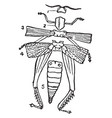 diagram of the external structure of an insect vector image vector image