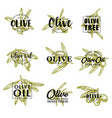olive oil and farm olives sketch lettering vector image