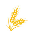 bunch wheat or rye ears with whole grain vector image