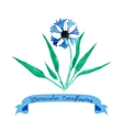 Card with cornflowers vector image vector image