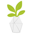 houseplant in modern pot decorative minimalist vector image