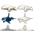 polar animals - coloring book vector image