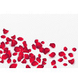 backdrop rose petals isolated on a transparent vector image vector image