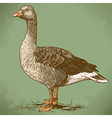 engraving goose retro