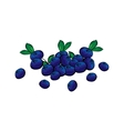 Hand drawn blueberries closeup vector image